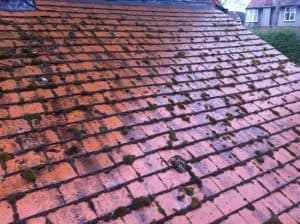 roof moss removal surrey
